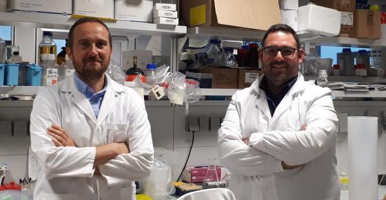 """Tumore al cervello: al CIBIO di Trento individuata la cellula da cui """"nasce"""""""